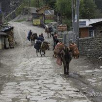 Jour 4 - Tour des Annapurnas