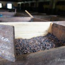 Cacao au départ pour la France…